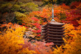 Japanese Temple in Autumn ; comments:87