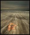 Морето и есента ; comments:61