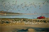 Птичи свят ; comments:89