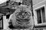 Котка ветеран ; comments:3