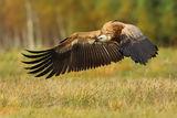 Vulture ; Comments:19