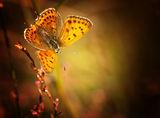 Магически крила ; comments:16