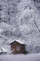 Къщичка в снега се гуши, но коминчето не пуши.... ; Comments:21