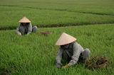 Плевене на тревата пред мавзолея на Хо Ши Мин ; comments:26