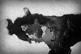 Вълк в съня ми ; comments:15