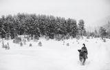 Сам в снега ; comments:88