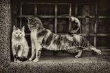 Котка непукист ; Comments:16