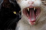 """Бела Маца църн котак. - """"Изхвърли боклука бе мързел......"""" :-) ; comments:43"""