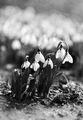 Иде пролет.. ; comments:57