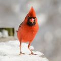 Angry Bird ; comments:40