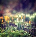 Пролетта наближава :) ; comments:73