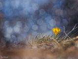С надеждата за пролетта ; comments:54