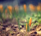 Всичко лекичко започва да се пробужда...идва пролетта! :) ; comments:40
