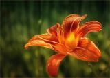 страст в оранжево.. ; comments:23