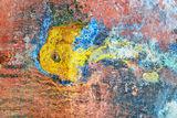 Подводен свят...(светът на мълчанието) ; comments:25