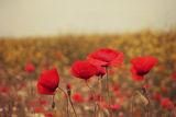 Красотата винаги е тук, единствено очите закъсняват... ; comments:66