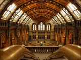 Natural History Museum, London ; comments:16