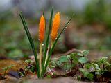 Предпролетно ; comments:31