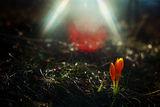 Когато слънчевата палитра се излее върху ланските треви... ; Comments:12