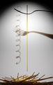 Спагет, вилица, светлина и сянка ; comments:14