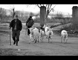 Фермери ; comments:49