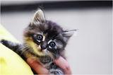 Бездомното коте ; comments:3