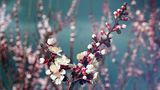 Пролетно ; comments:34