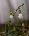 Пролетно ; comments:27