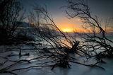 Паяжина от мангрови дървета. ; Comments:11
