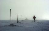 Напред в мъглата ; comments:8