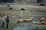 Когато бях овчарче... ; comments:19