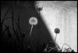 ...и черната ми сянка... ; comments:37