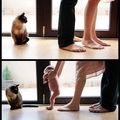грижите на една котка... ; comments:54