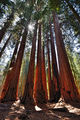 Sequoia National Park ; comments:22