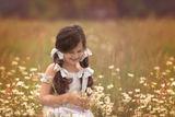 цвете сред маргаритките :))) ; comments:17