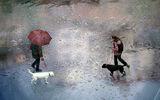 Сезонът на дъждовете 14 ; comments:51
