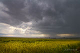 летни бури ; comments:41