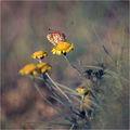 Сезонът на пеперудите ; comments:55