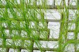 green.P.ea.C.e ; comments:5