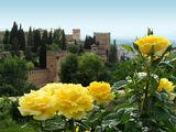 Розите на Алхамбра ; No comments