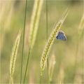 Сезонът на пеперудите ; comments:37