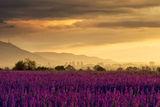 пурпурно... ; comments:20