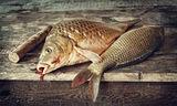 Ударени риби ; comments:4
