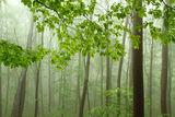 Зелена нежност ; comments:21