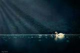Мама Лебед и Дечицата И ; comments:30