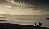 странното утро на каяк-рибаря ; comments:19