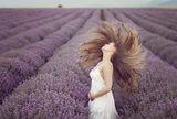Lavender sun ; comments:49