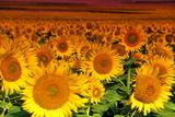 Добро утро Слънце!... ; comments:3