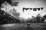 в един селски двор ; comments:68