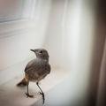 Птичка в стаята ми... ; comments:100